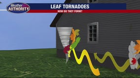 Explaining 'leaf tornadoes' and how they form