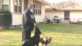 Waterford man has two of his dogs shot randomly out in his yard