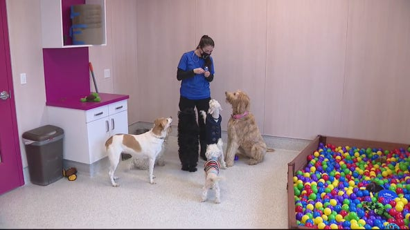 Michigan Animal Rescue League unveils new shelter three times larger in Pontiac