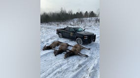 Three relatives charged with poaching elk in northern Michigan state forest