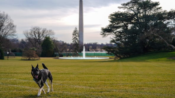 President Biden's dogs officially move in to White House