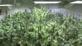 Future Detroit pot growers have one more day to apply for 'legacy' status