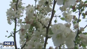 The Doctor Is In : Answering Spring Allergy questions