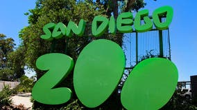 Man arrested after entering San Diego Zoo's elephant habitat with 2-year-old child