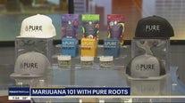 Marijuana 101 with Pure Roots