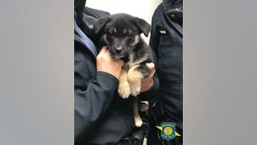 Police rescue puppy from abandoned car on I-75 in Detroit
