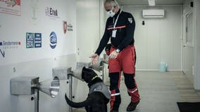 Dogs 97% effective in detecting COVID-19 in human sweat, according to French study