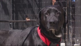Detroit Dog Rescue in desperate need of food, cleaning supplies, other items for pets -- How to help