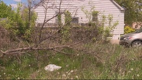 Woman needs help after tree falls on elderly mother's Detroit home