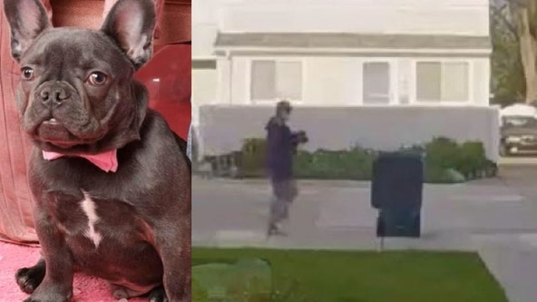Police looking for man who stole French bulldog from Royal Oak yard