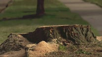 Mass tree removal in Livonia by city has some resident furious