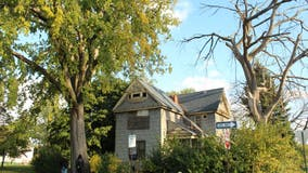 Ann Arbor nonprofit seeks Michigan's biggest trees