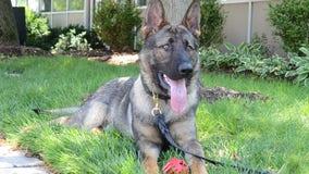 Berkley welcomes newest police dog -- Bear