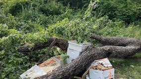 Bees in the D seeks donations after 3 honeybee hives destroyed during storm