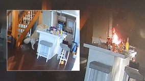 VIDEO: Michigan dog starts house fire while trying to grab food from counter
