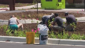 Rain gardens in parking lots can reduce flooding and pollution