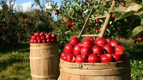 Michigan hard cidermakers win nearly 200 medals at Great Lakes International Cider & Perry Competition