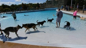 Doggy Dip: Take your pup for a swim at Ypsilanti's Rolling Hills Water Park