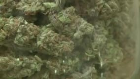 Warren to vote on medical marijuana sales in city but attorney says process not transparent