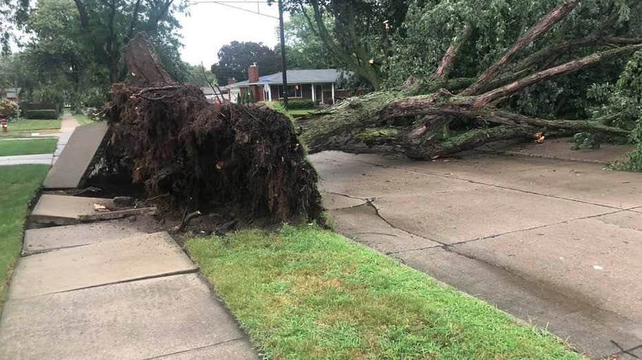 A downed tree in Troy. Photo courtesy of Jeff Kuehn.
