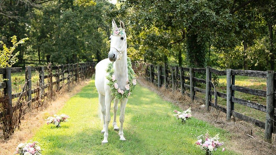 Unicorn-3-Little-Tots-Photography-Sarah-Lawrence.jpg