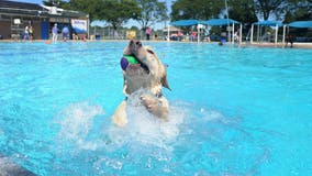 Take your dog swimming at Ann Arbor's Buhr Park Pool