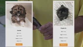 Online Shih Tzu puppy scam takes Troy man for thousands