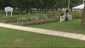 Clinton Township senior garden ransacked, 300 pounds of veggies stolen