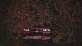 Severe weather takes down trees in Detroit, blocking access to multiple roads