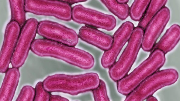 Salmonella outbreak with unknown food source infects nearly 600 people nationwide