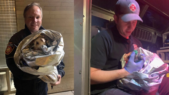 Royal Oak firefighters rescue dog from cemetery pond