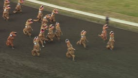 T-Rexes race to the finish line at horse track in hilarious video
