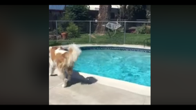 Dog in California sensed earthquake moments before it happened