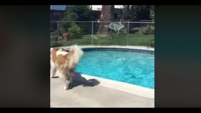 Dog in California sensed earthquake moments before it happened