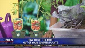 How to make your summer garden a sunny success