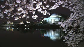Washington, D.C. police close down streets and bridges to limit crowds visiting cherry blossoms