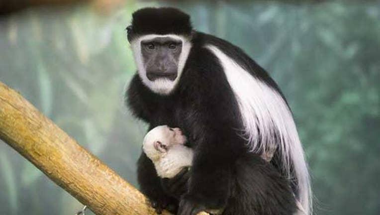 0348e001-zoo baby_1483650804992.jpg
