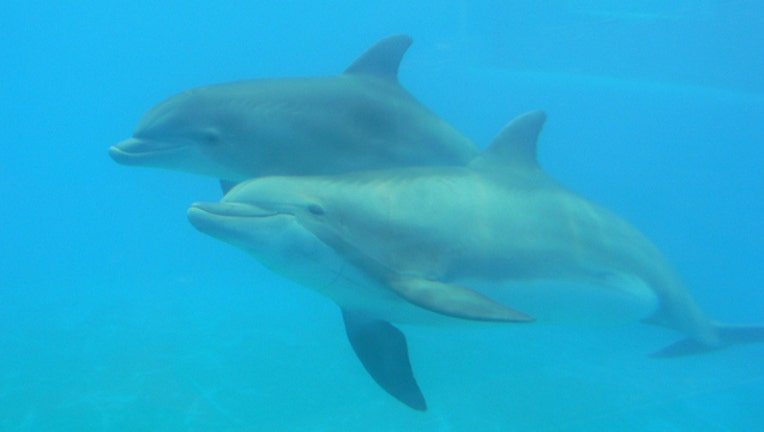 05d735c0-Dolphin stock image from Nick Ares via Flickr