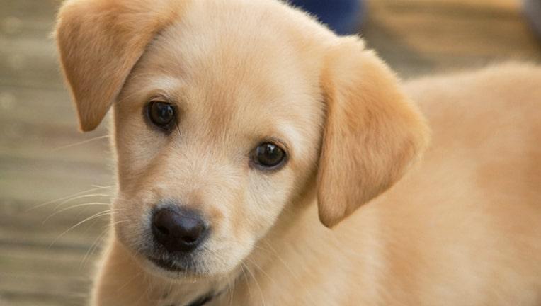 puppy_1494290952129.jpg