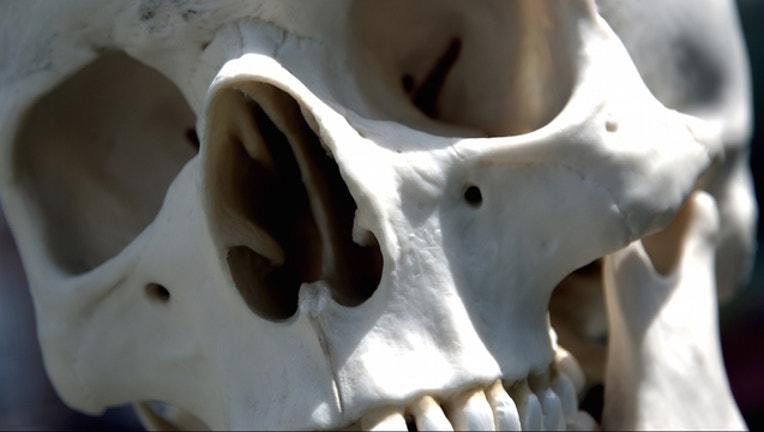 human-skull_1444491255589.jpg