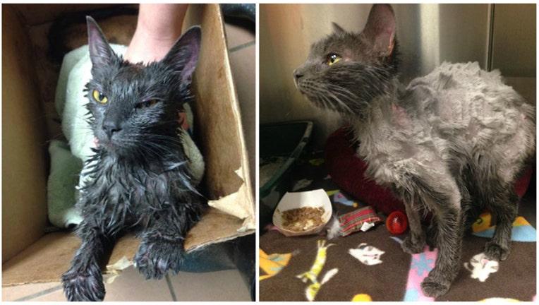Maisy the cat photos provided by Humane Society