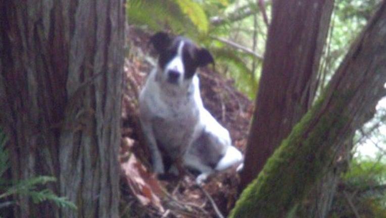 0fd25d8d-dog hiker for web_1556367168905.png-402429.jpg