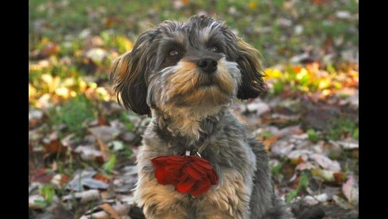1418c3e5-pretty-puppy-dog