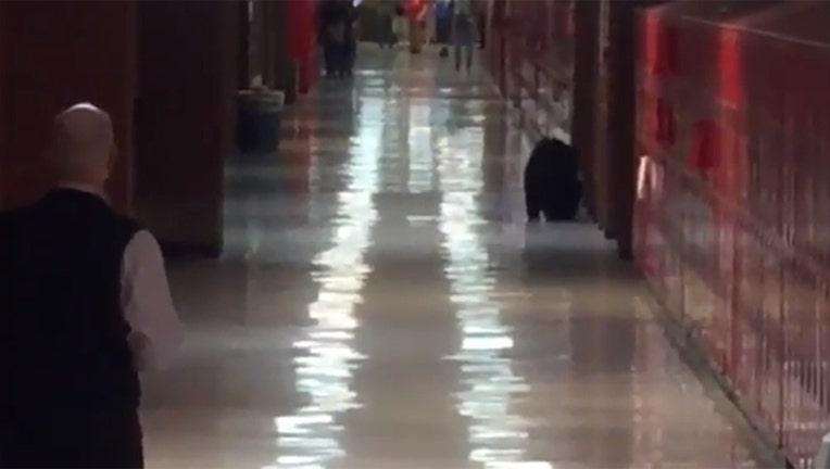 bear-in-school_1444847999737-402970.jpg
