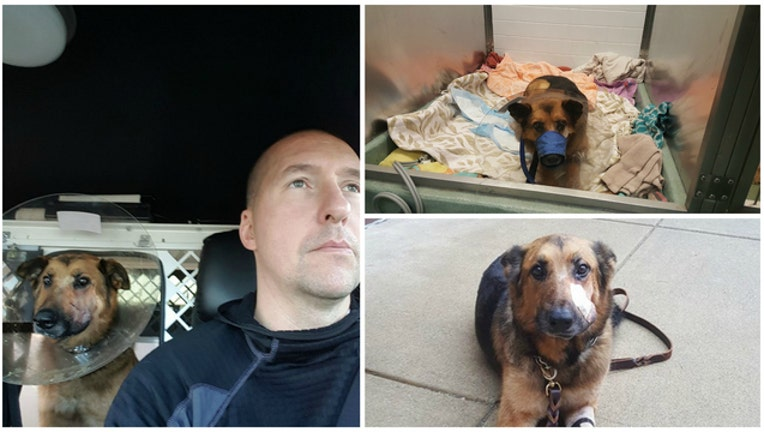 1f287b3c-K9 Blade injured in the line of duty (photos courtesy Lake County K9 Association Facebook page)