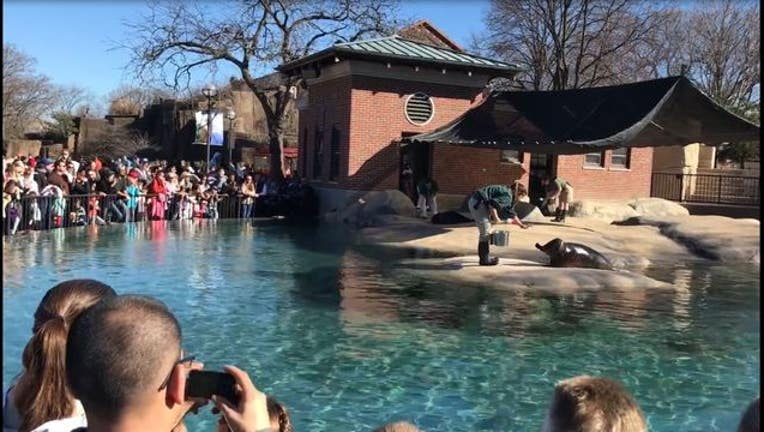 273b8e06-The Lincoln Park Zoo was packed thanks to the record-breaking warmth in Chicago Saturday. Photo Fresco News by Katy Schlake