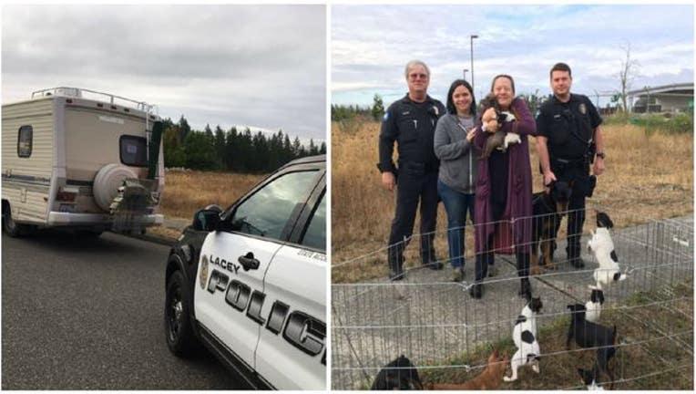 Winnebago dogs saved