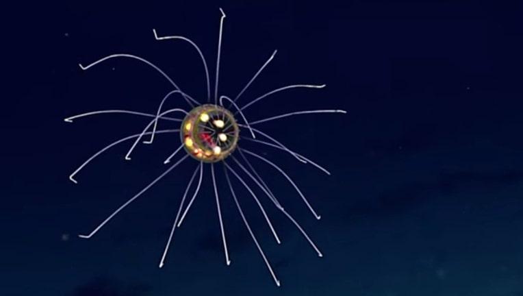 337b4098-jellyfish-deep-sea_1462050780114.jpg