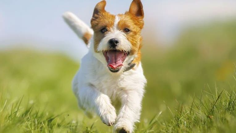 410e6c98-happy-dog
