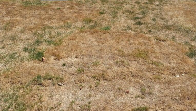 49ce5dad-Dead lawn